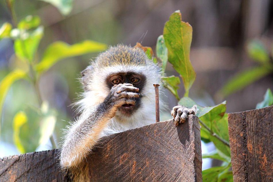 Beautiful stock photos of nail,  Animal Hair,  Animal Head,  Animal Themes,  Animals In The Wild
