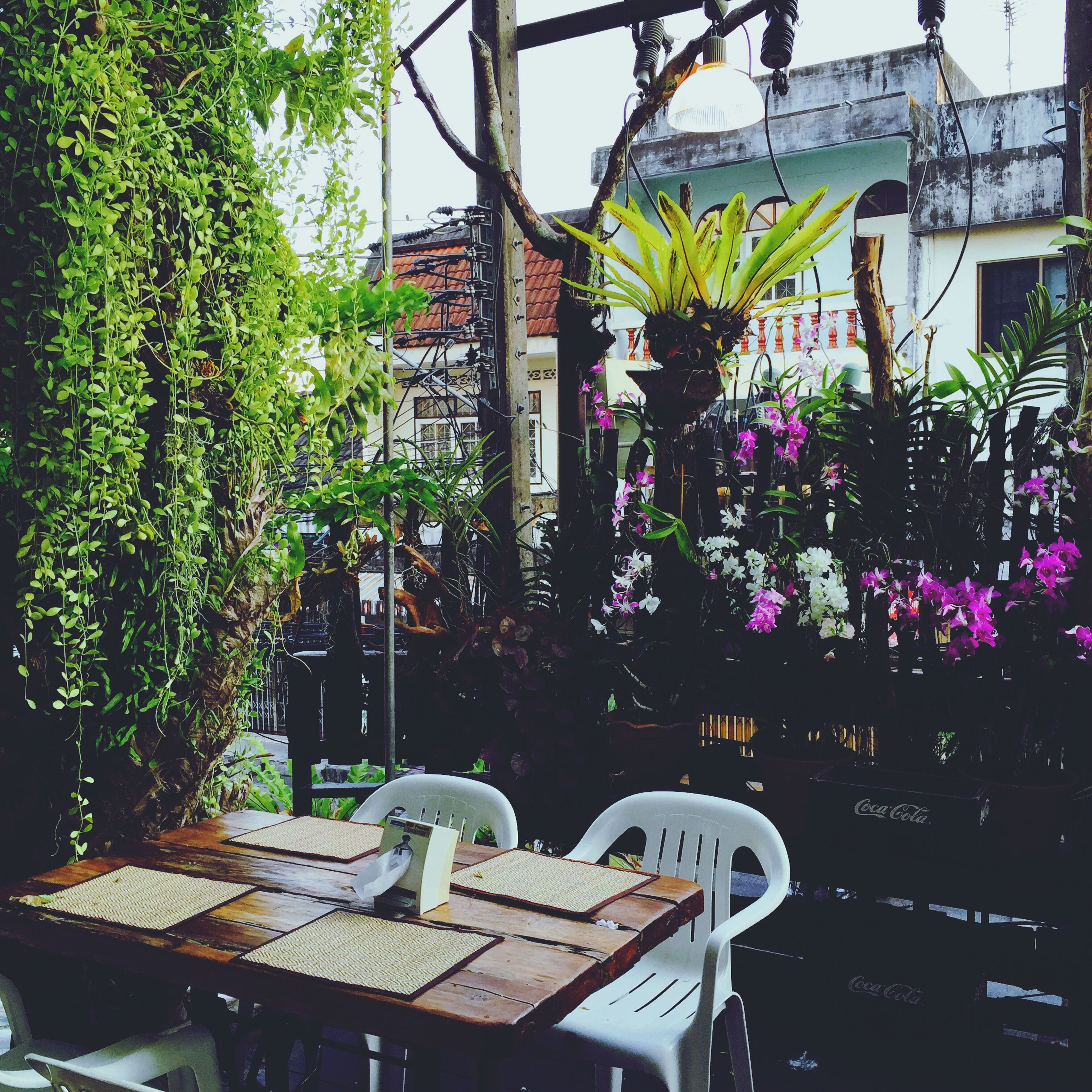 architecture, built structure, building exterior, house, potted plant, tree, plant, residential structure, window, chair, residential building, growth, day, no people, balcony, sunlight, front or back yard, roof, outdoors, building