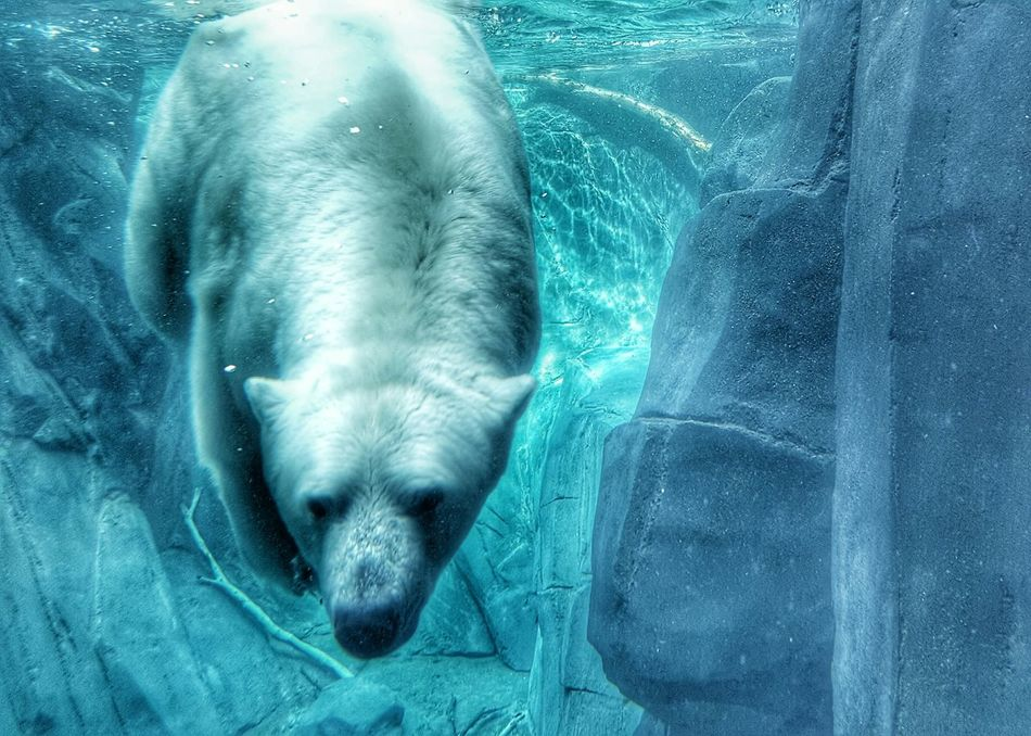Beautiful stock photos of polar bear, Animal Themes, Animals In The Wild, Cold Temperature, Day