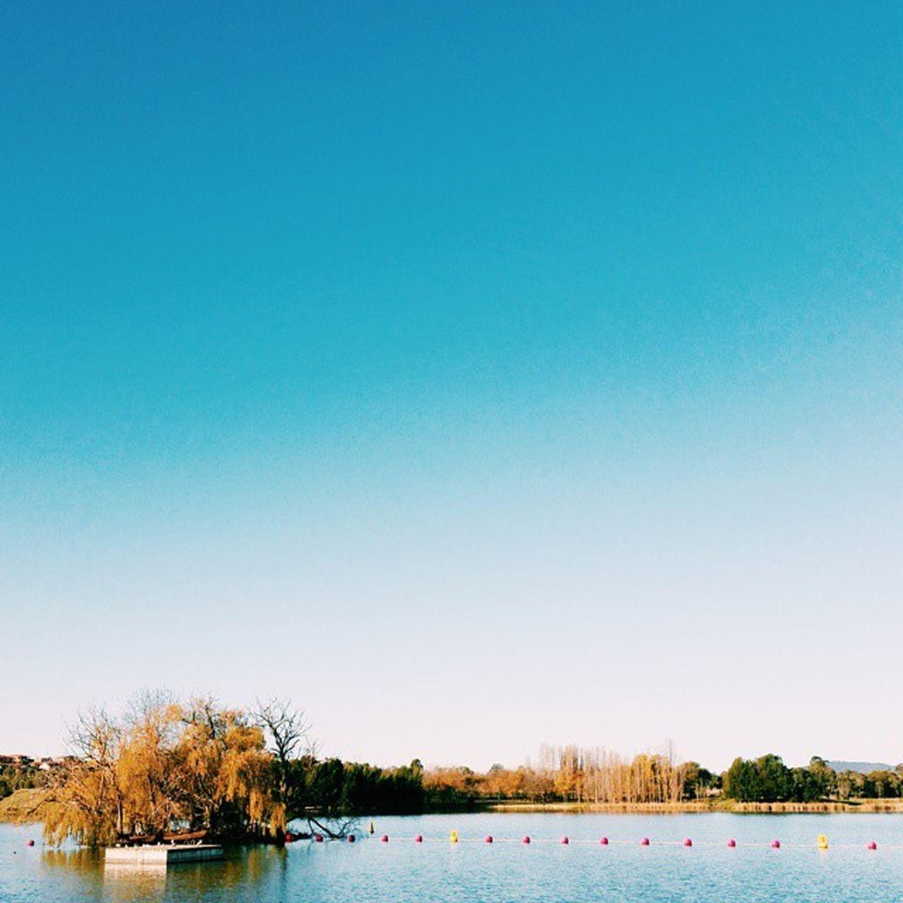 Sunny blue sky... Vscocam Sunnyday Sunny Bluesky Autumn Lakeginninderra