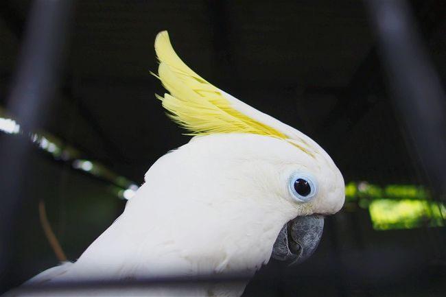 ...cacatoo Picturing Individuality Cacatoo Bird Photography Birds_collection Check This Out Taking Photos Framing Indonesia_allshots EyeEm Surabaya Animal_collec