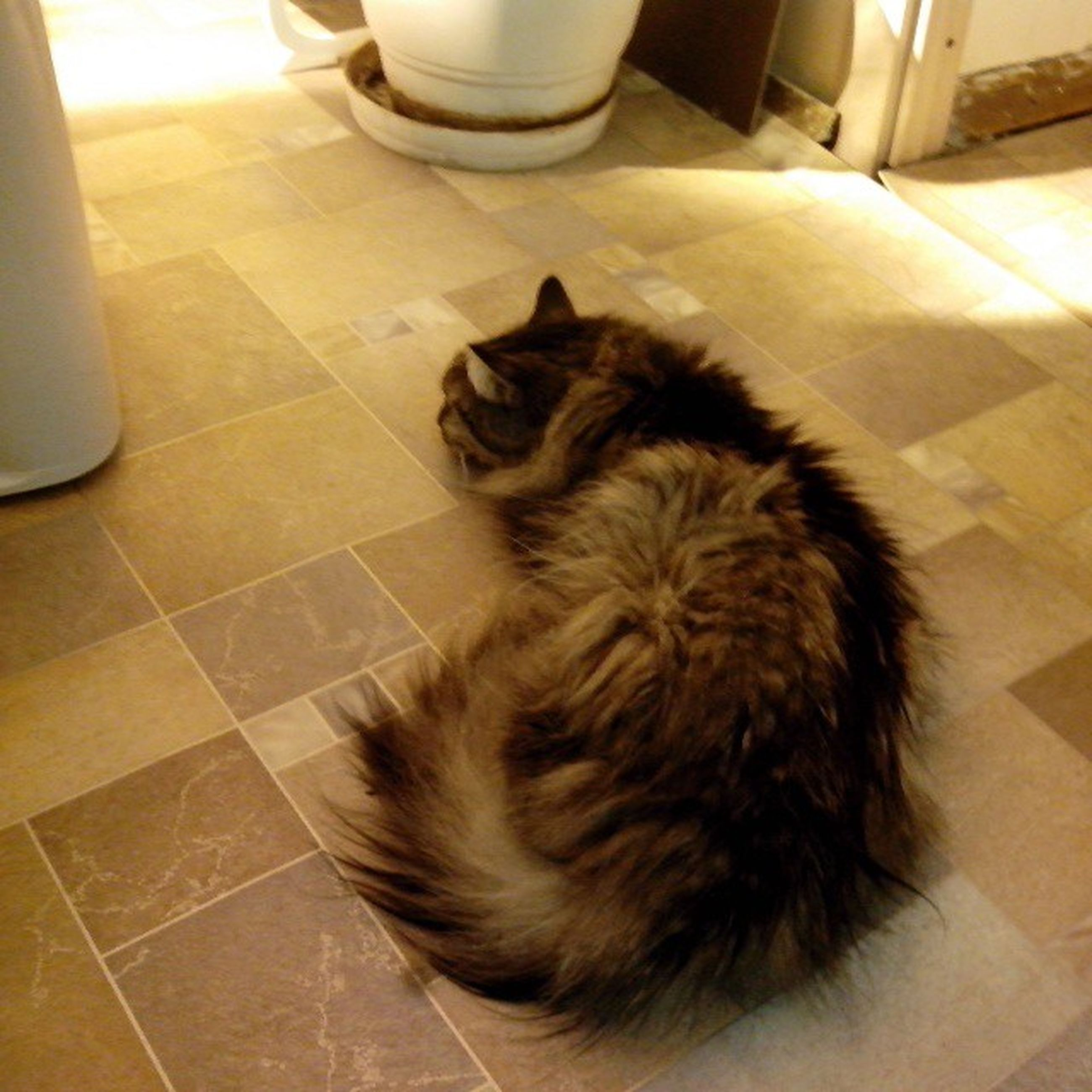indoors, pets, domestic animals, animal themes, one animal, mammal, domestic cat, relaxation, cat, tiled floor, home interior, flooring, high angle view, resting, feline, lying down, sleeping, home, floor, sitting
