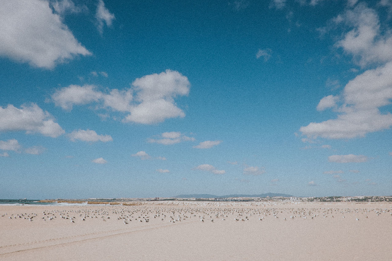 Arid Climate Beach Beach Walk Beauty In Nature Birds Blue Sky Cloud - Sky Day Desert Landscape Minimal Nature No People Outdoors Sand Sand Dune Sky Sky And Clouds Sunbathing Tranquility