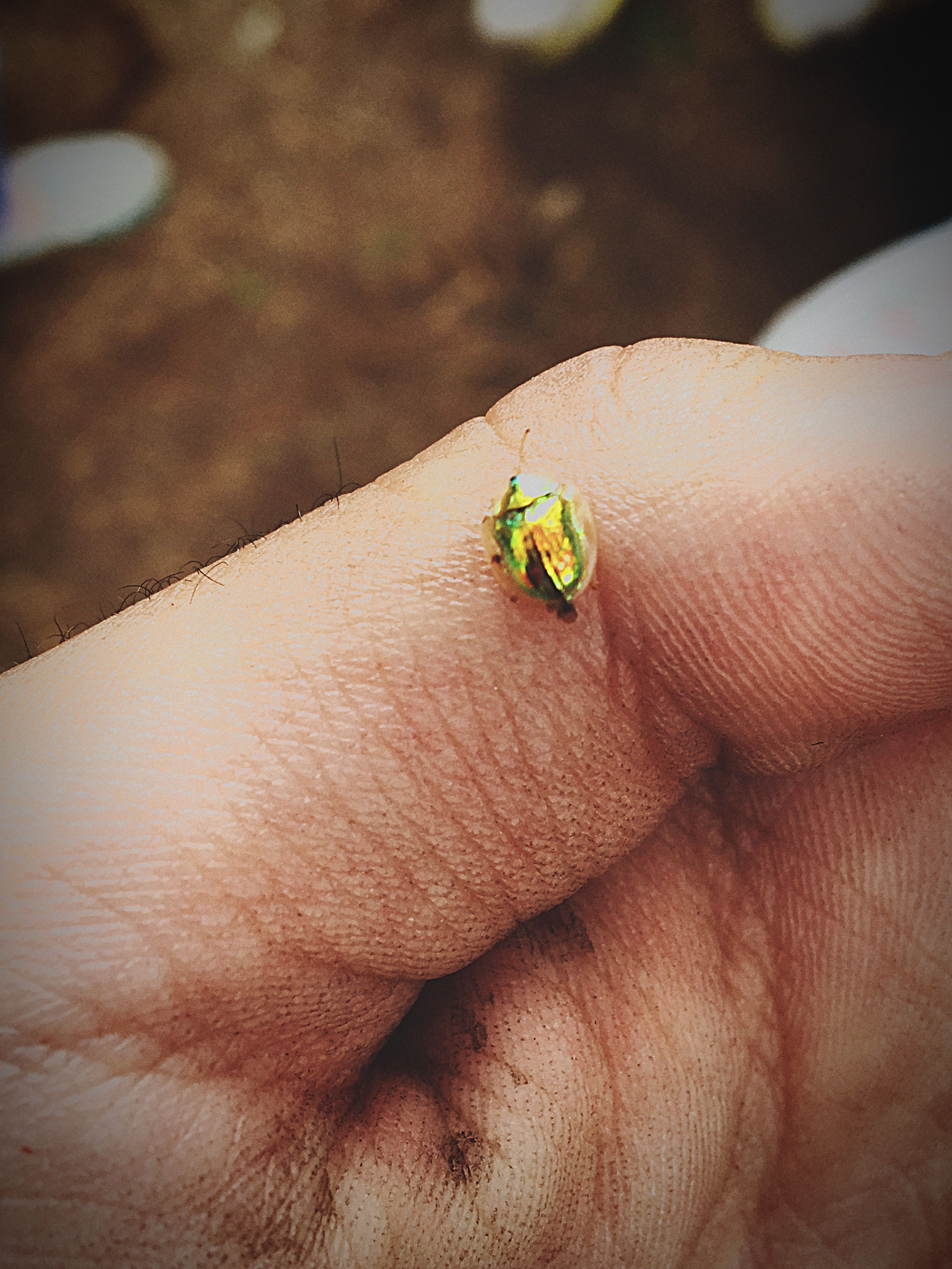 one animal, animal themes, animals in the wild, insect, wildlife, close-up, person, focus on foreground, selective focus, part of, nature, holding, human finger, unrecognizable person, ladybug, zoology, day