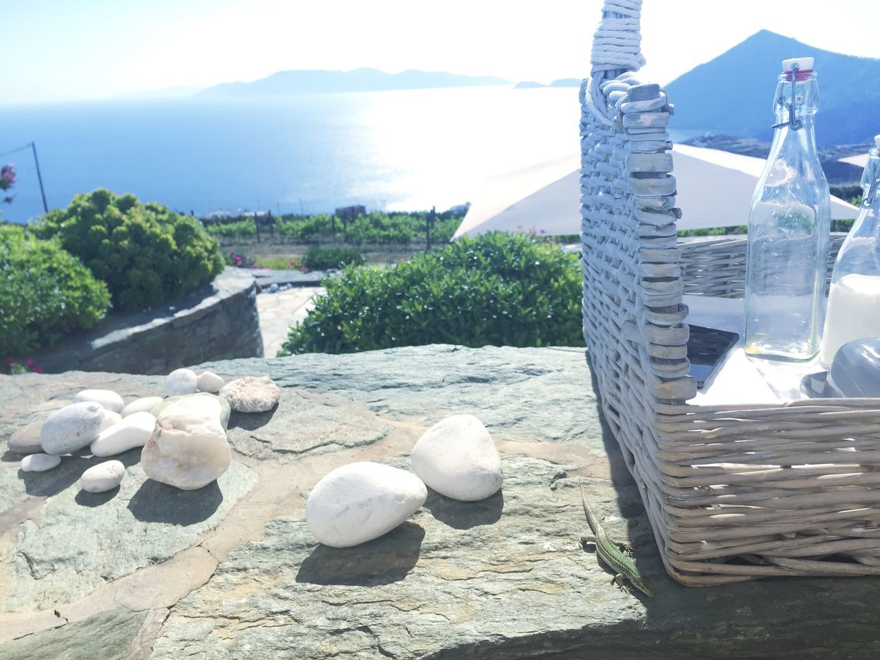 Greece Cyclades Folegandros Breakfast Amazing View Salamander Gecko