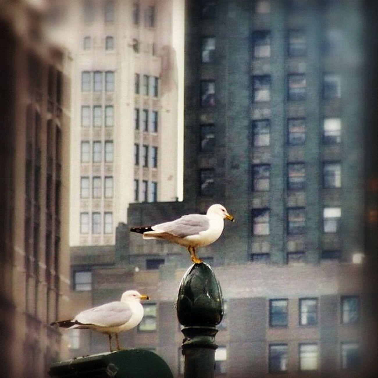 NYC Newyork Honktravel
