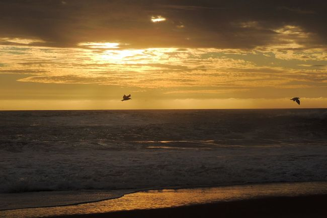 Beach Photography Life Is A Beach Birds In Flight Sun Light Waves, Ocean, Nature Walking On The Beach Alone... Sun Reflection On Sand Horizon Over Sea Sun Through The Clouds Golden Afternoon Afternoon Sun EyeEm Nature Lover Beautiful Scenery Beauty In Nature Reñaca Beach , Chile