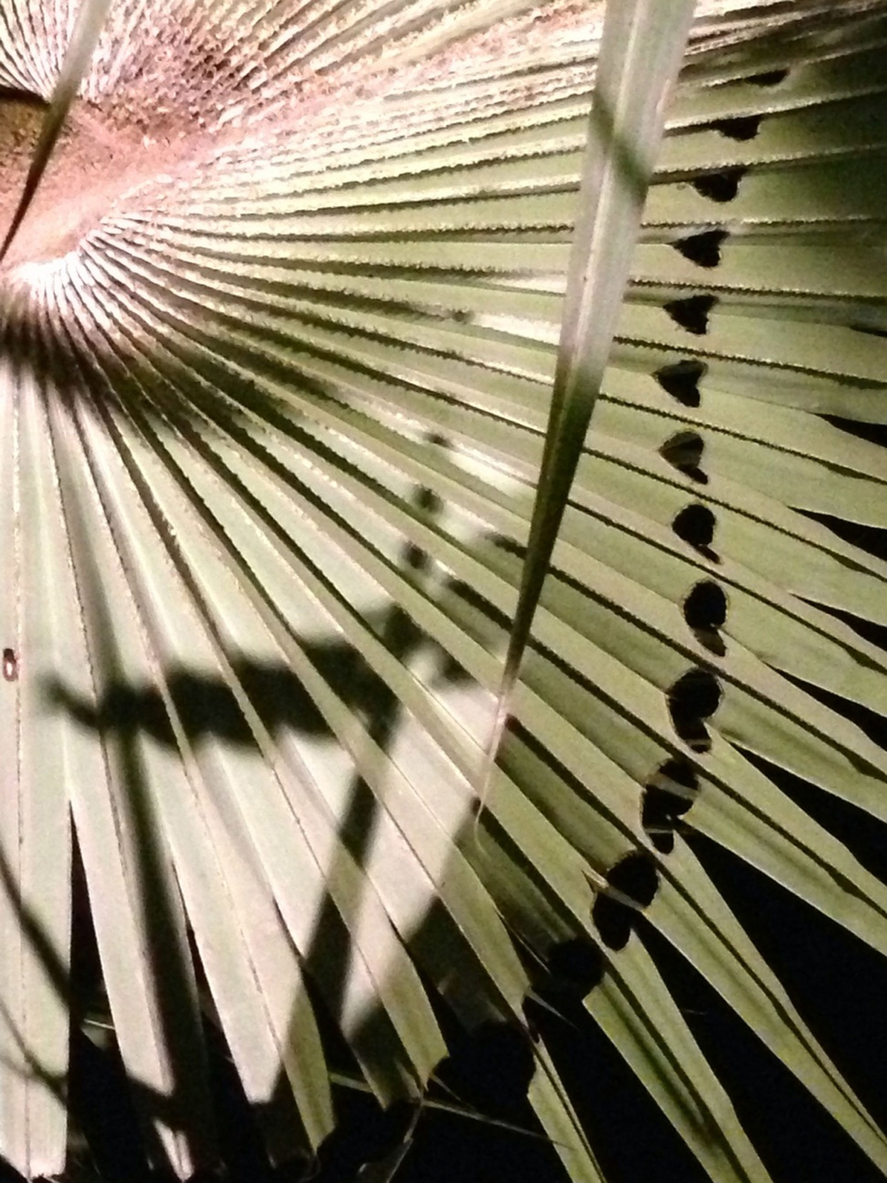 pattern, full frame, backgrounds, close-up, design, repetition, abstract, metal, textured, low angle view, indoors, striped, spiral, palm leaf, no people, detail, day, metallic, in a row, sunlight