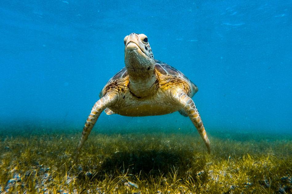 Beautiful stock photos of kunst, Animal Themes, Animal Wildlife, Animals In The Wild, Cancun