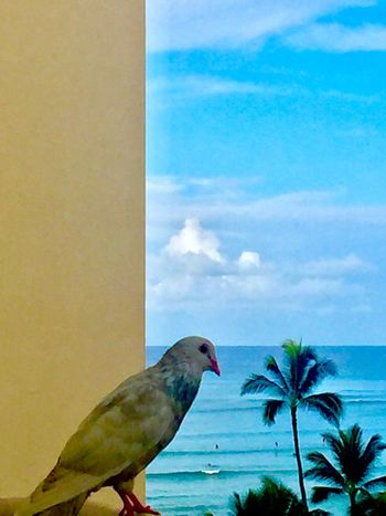 Bird One Animal Sky Day Perching No People Animal Wildlife Outdoors Nature Close-up Beauty In Nature The Week On EyeEm Oahu Oahu, Hawaii Pacific Ocean View Island Palm Trees Paint The Town Yellow Been There. Lost In The Landscape Island Of Oahu, Hawaii Second Acts Honolulu, Hawaii Perspectives On Nature Oahu / Hawaii An Eye For Travel