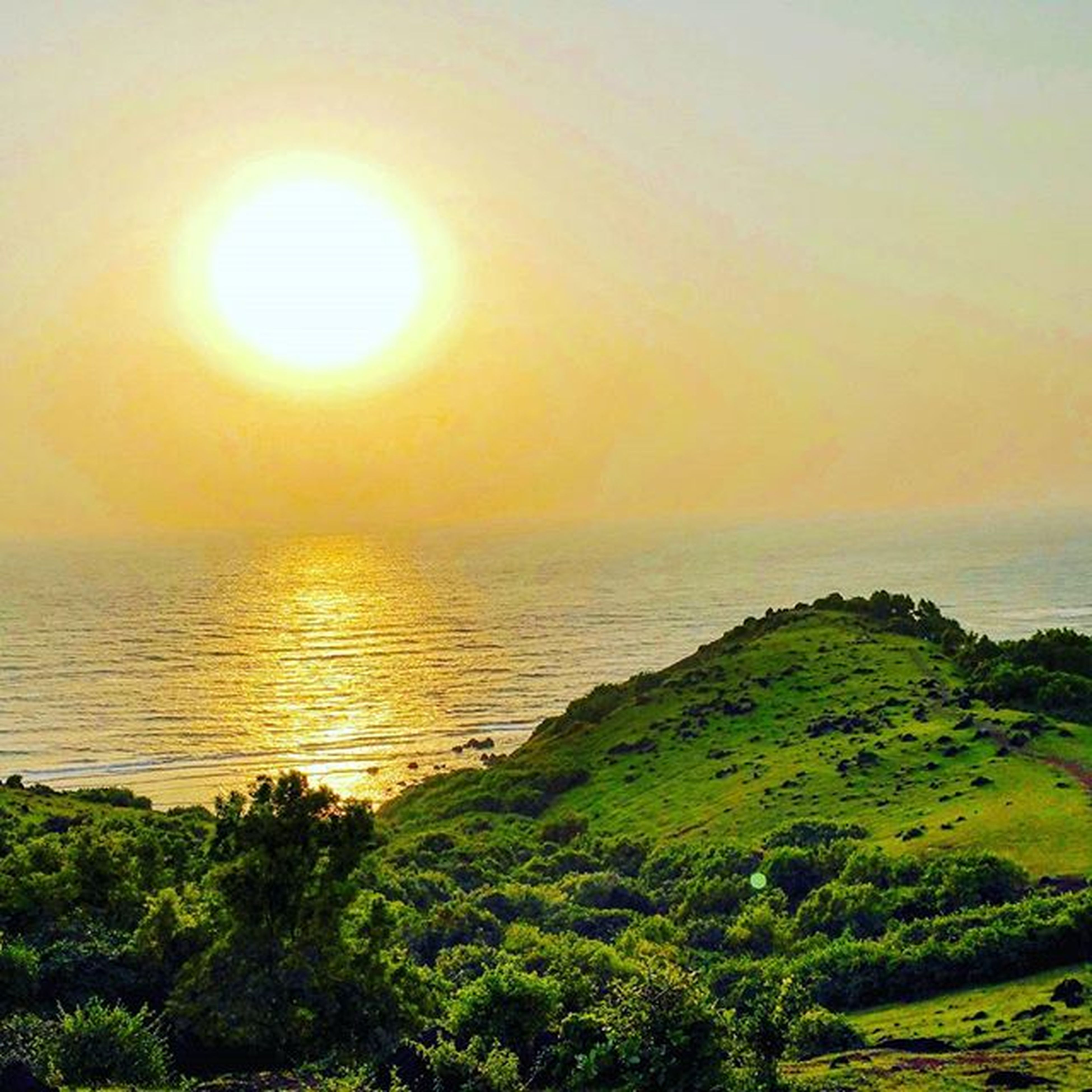 sea, scenics, tranquil scene, sun, horizon over water, water, beauty in nature, tranquility, sunset, nature, idyllic, sky, tree, sunlight, orange color, green color, outdoors, growth, non-urban scene, no people