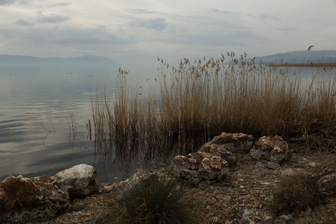 lakeshore on a cloudy afternoon Beauty In Nature Cloudy Iznik Lake Landscape Nature No People Plants Reeds Rocks Shore Shoreline Sky Stormy The Great Outdoors - 2017 EyeEm Awards Tranquility Turkey