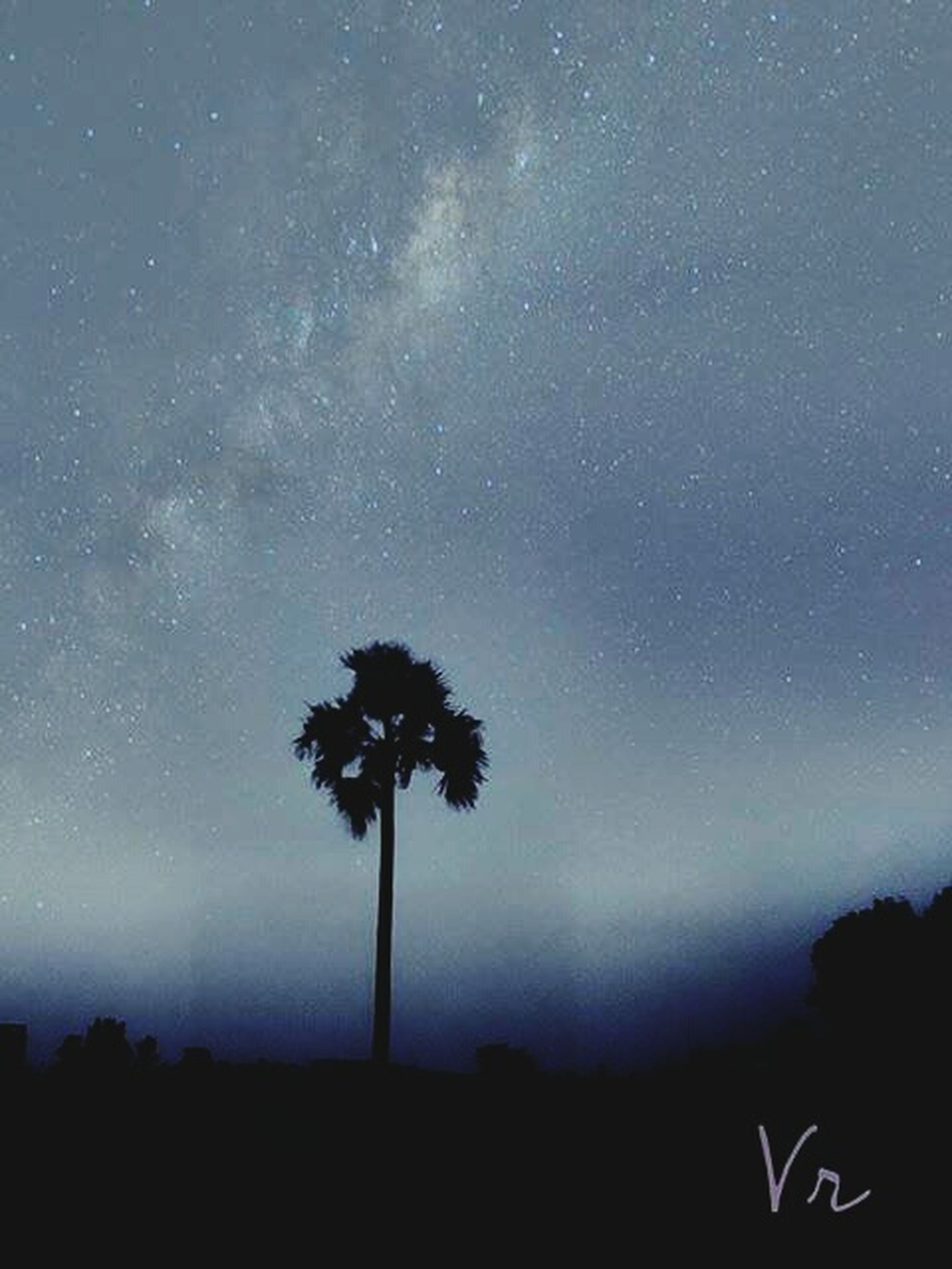 silhouette, tree, sky, tranquility, beauty in nature, low angle view, tranquil scene, scenics, nature, dusk, night, landscape, dark, growth, palm tree, outline, idyllic, outdoors, no people, field