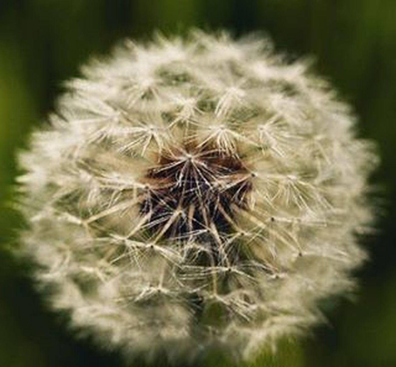 Polline Prato Primavera Grugliasco Natura Allergia Fiori Profumodiprimavera Finalmentelaprimavera