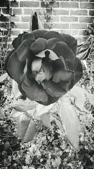 Black And White Photography Rosé Nature Posh Brick Pearl Street Mall Alleyway Check This Out