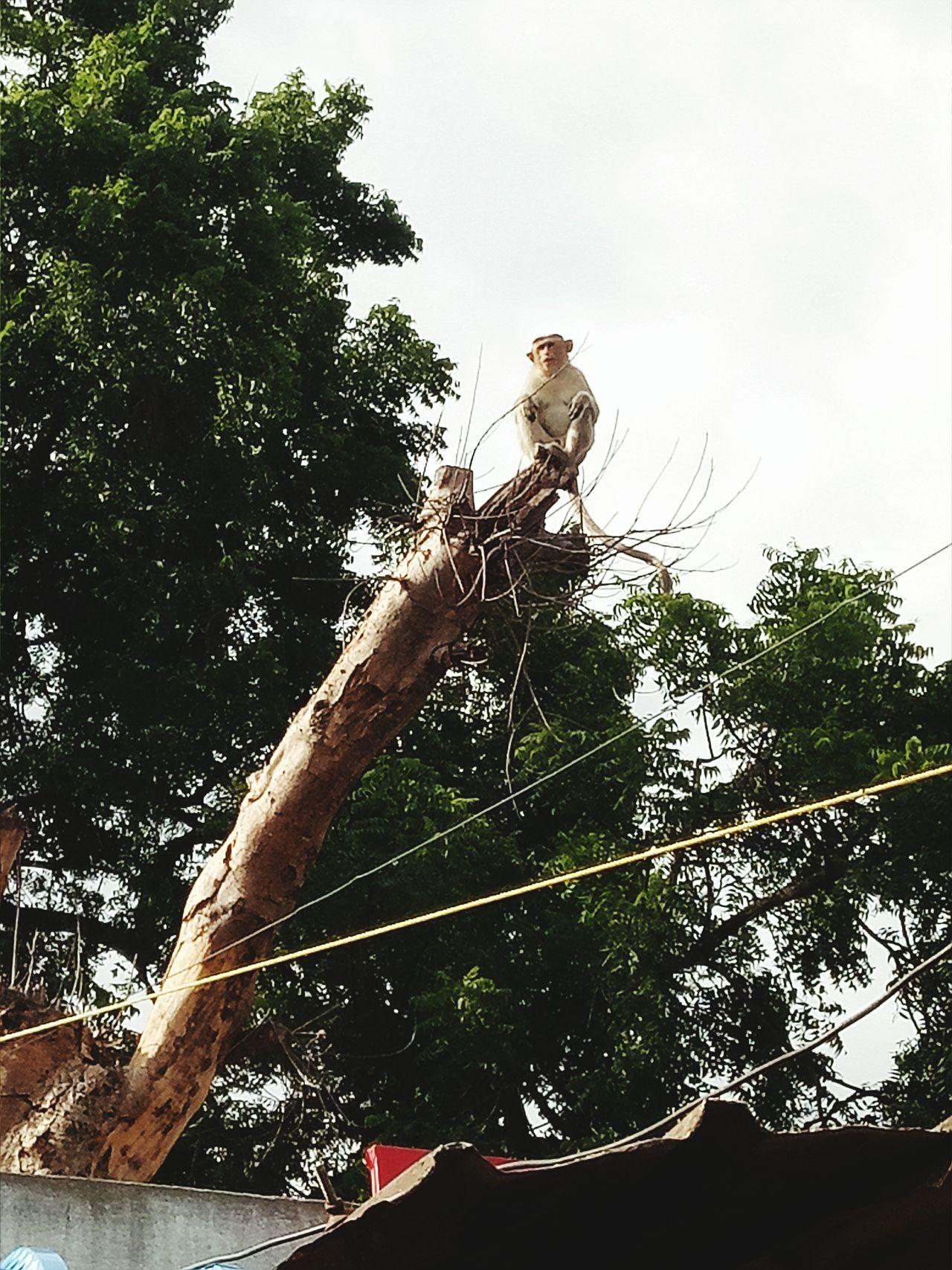 Monkey Tree Animal Street photography Hoganakkal Dharmapuri TN India