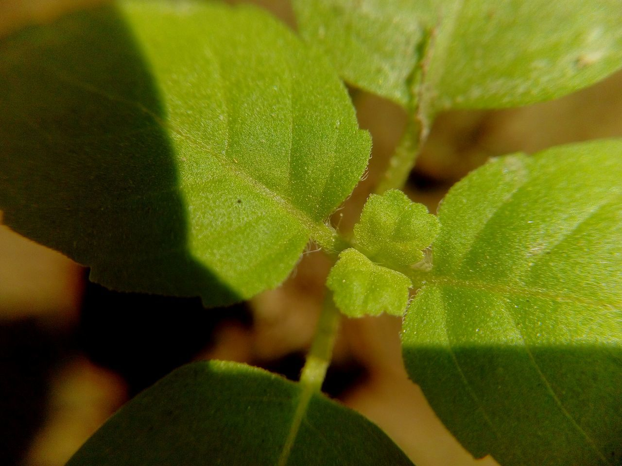 Animal Themes Beauty In Nature Close-up Day Green Color Growth Insect Leaf Nature No People Outdoors