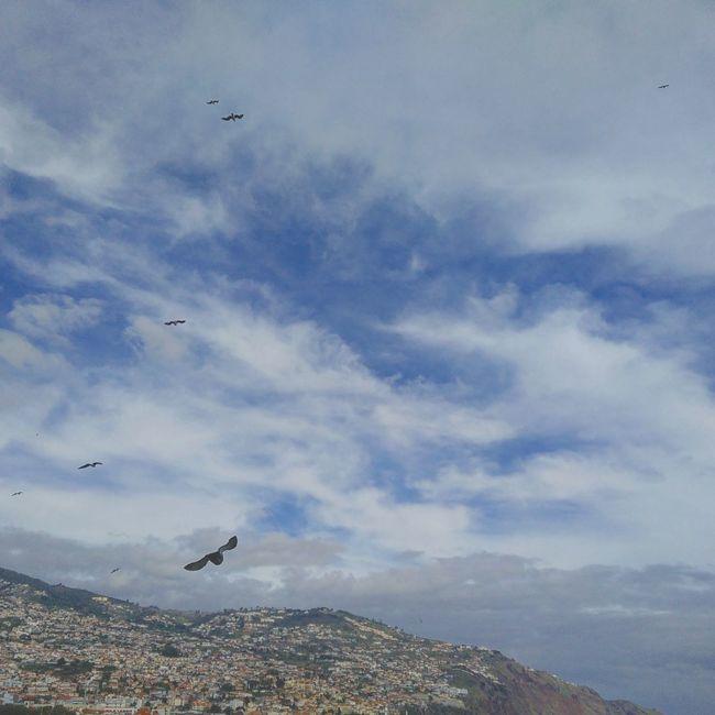 Fly Away Alwayslookup