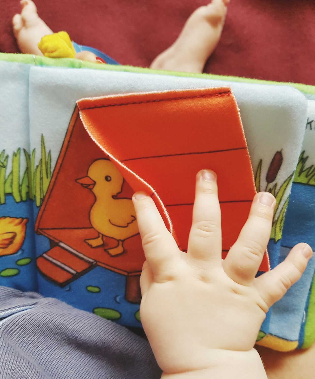 Curiosity Cropped Babyhands Hands Holding Book Where's The Duck Looking For Something Childrensbooks Picture Book Pages Colors Duck Baby Sitting Toddler  Curiosity Exploring Read A Book Learning Growing Up Babyfingers Discovering At Home Illustration Little Duck Showcase June
