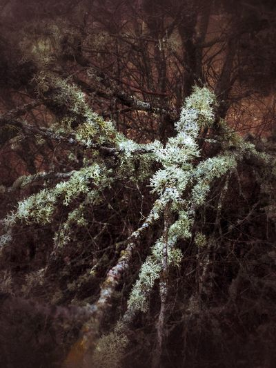 Moss Tree Branches Beautiful Nature Springtime Walking The Dog