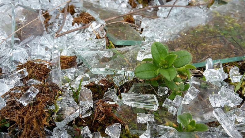 Broken Glass Glass Shards Garbage Lost Lost Places Lost Place Plants 🌱
