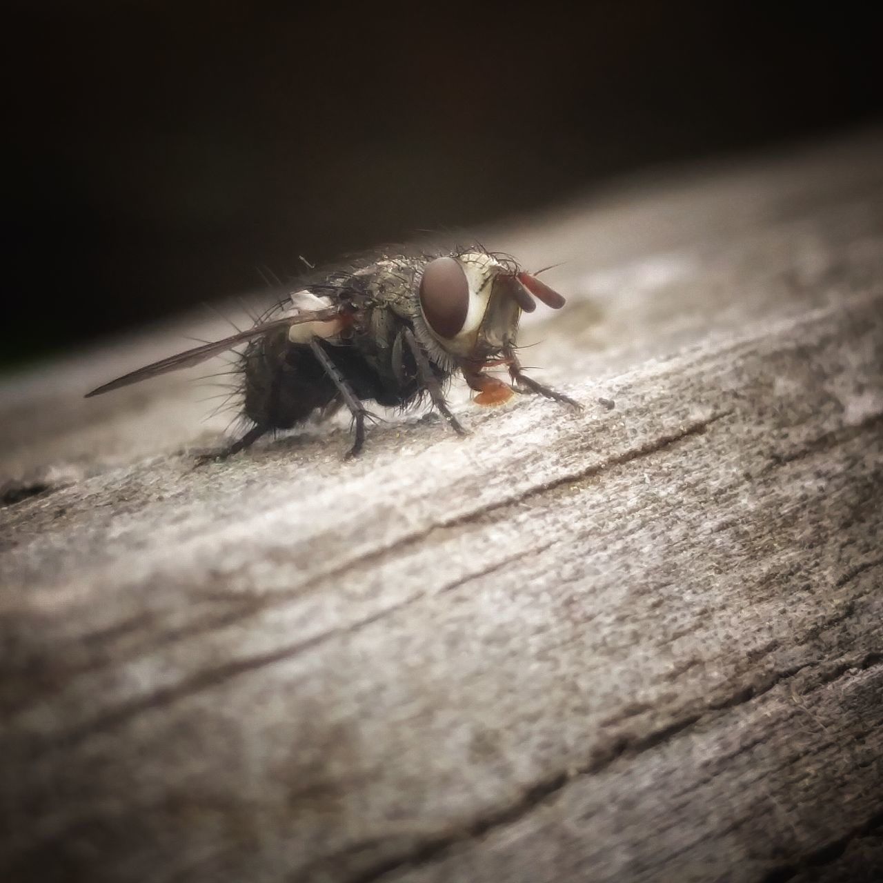 animal themes, one animal, animals in the wild, selective focus, animal wildlife, wood - material, insect, close-up, no people, outdoors, day, nature