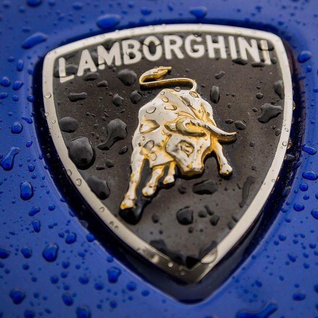 Lamborghini Emblem  Macro Macro Photography