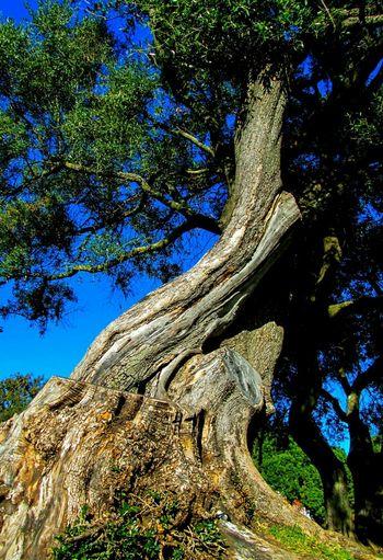TreePorn Nature_collection EyeEm Nature Lover EyeEm Best Shots