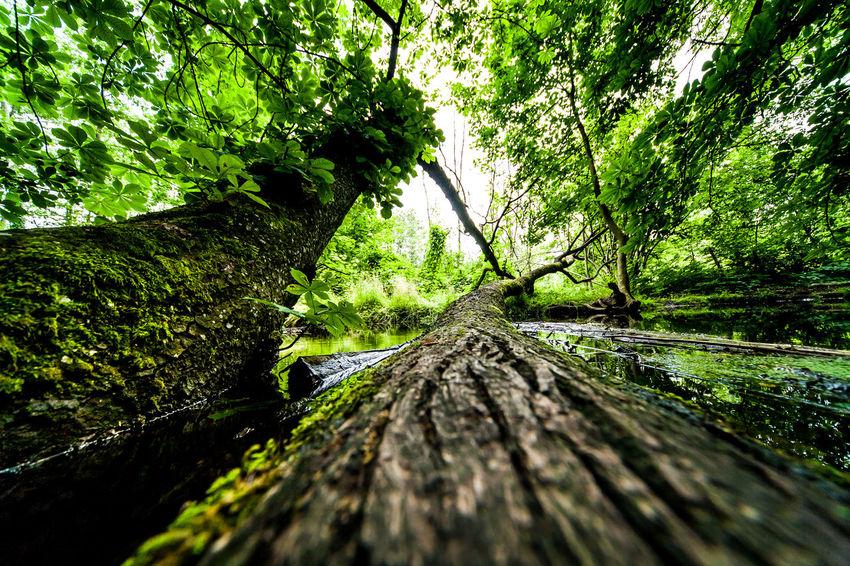 Ein Tag in Buckow, in Brandenburg. BACH Baum Braun EyeEm Nature Lover Grün Nature Nature_collection Naturschutzgebiet Outdoors Puddle Reflexions River Spiegelung Spiegelung Im Wasser