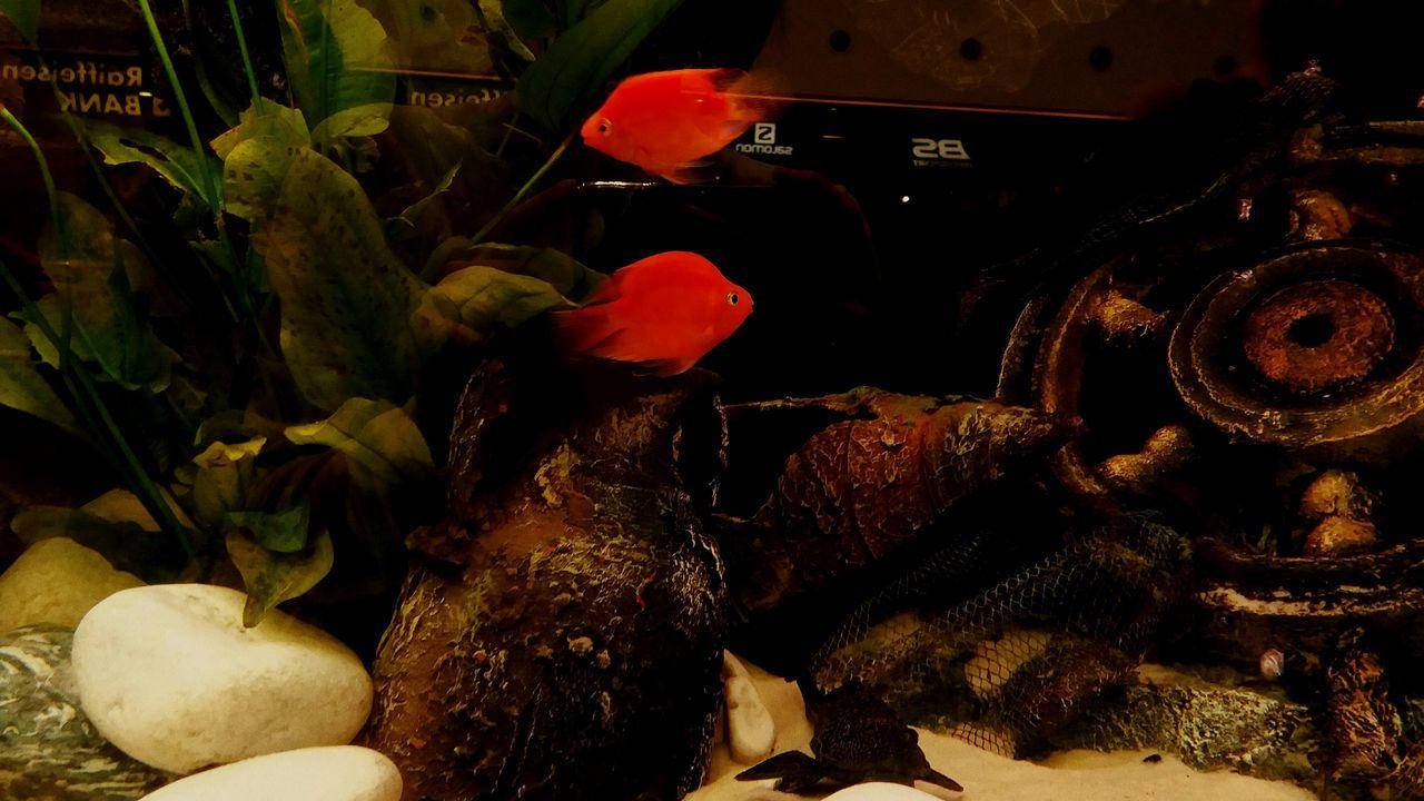 Fishes Fish Tank Fish Tank Decoration Decoration Ship Orange