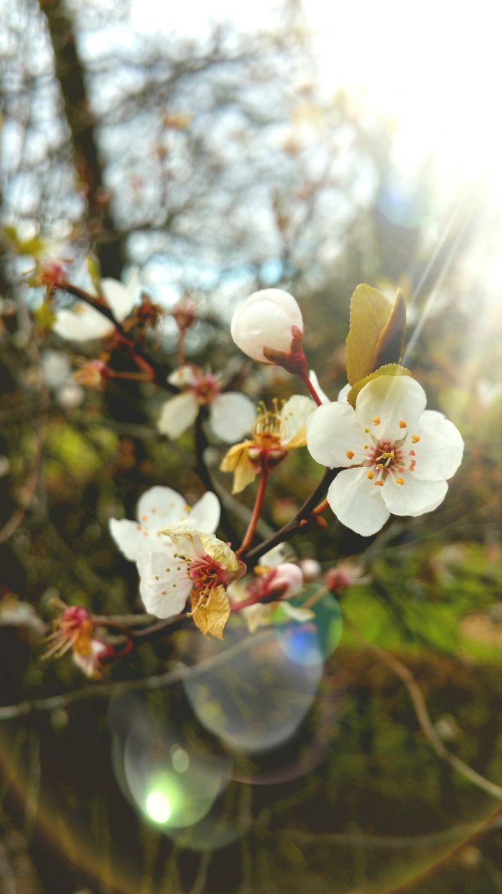 flower, growth, nature, tree, beauty in nature, blossom, fragility, bright, branch, apple blossom, freshness, petal, no people, blooming, springtime, close-up, outdoors, day