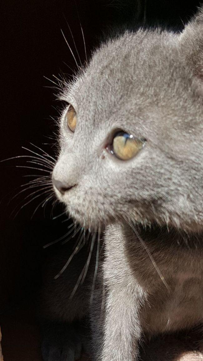 EyeEm Nature Lover Cat Cat Portrait Catwatch Sweatcat Pet Cats Of EyeEm Nofilternoedit Samsung Galaxy S6 Edge Nofilter