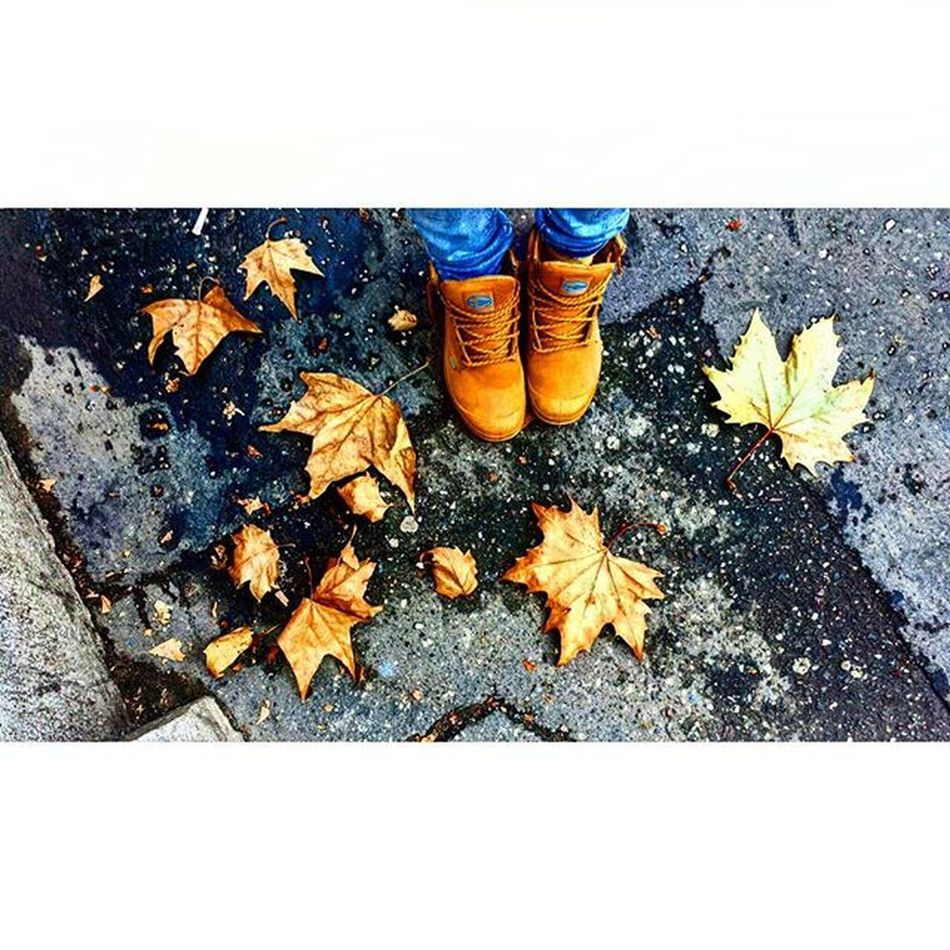 Autumn in Belgrade Streetsofbelgrade ColorsOfAutumn Autumnleaves