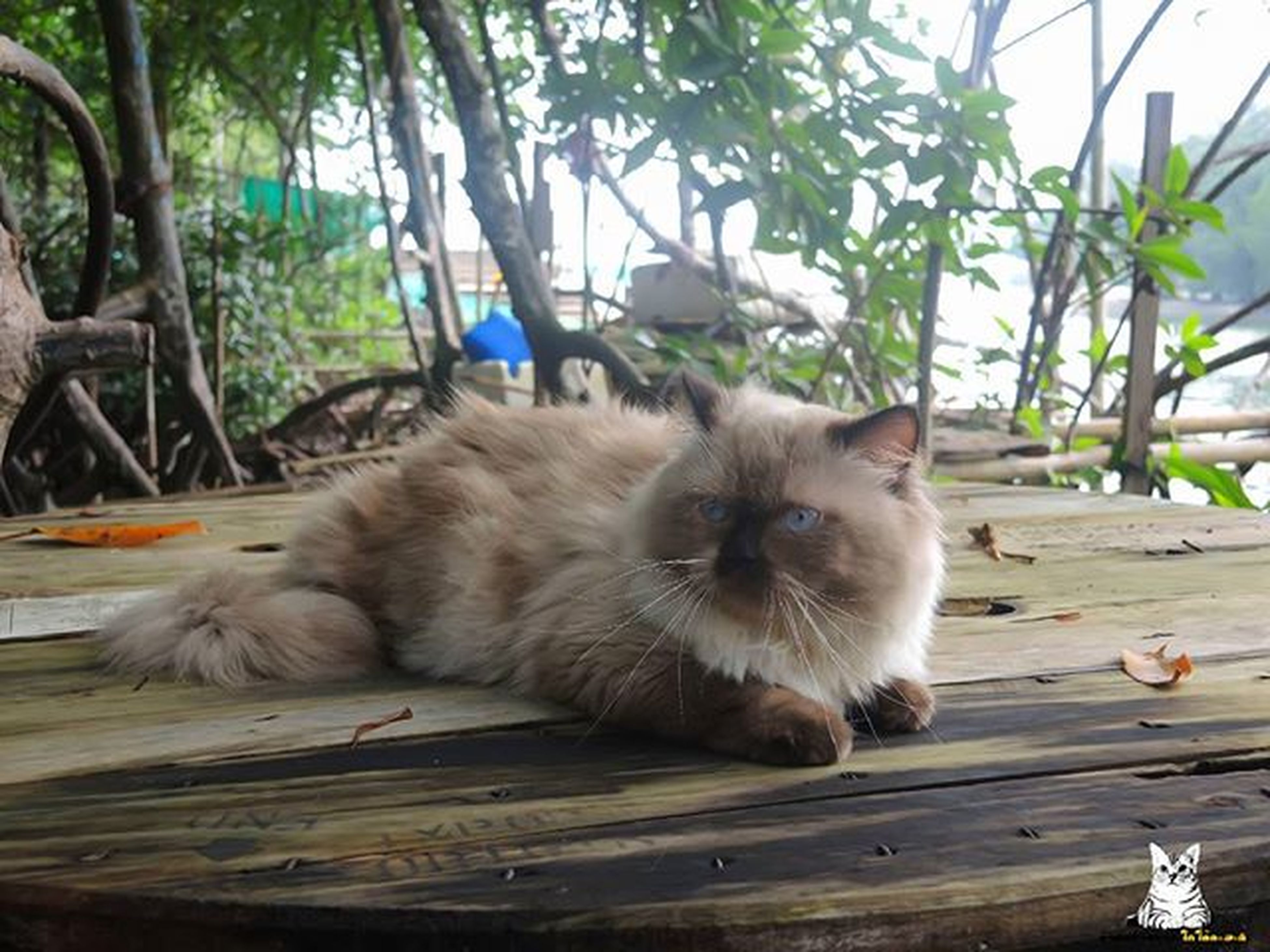 domestic cat, animal themes, cat, mammal, feline, one animal, domestic animals, pets, relaxation, whisker, sitting, wood - material, tree, portrait, resting, plant, close-up, looking at camera, outdoors, day