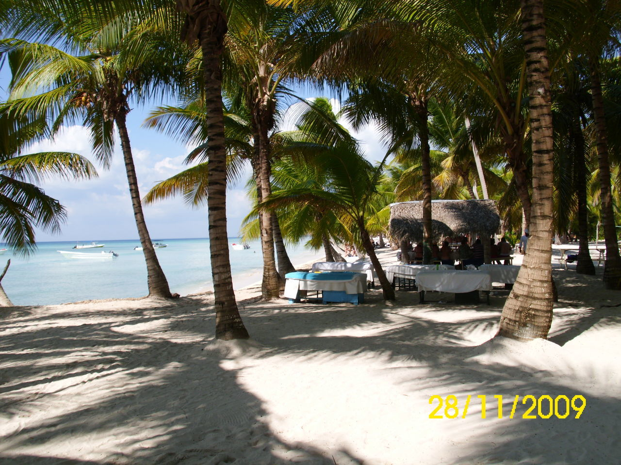 palm tree, beach, tree, sea, day, sand, outdoors, nature, no people, sunlight, water, tree trunk, sky