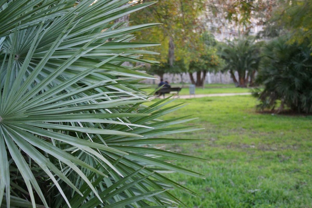 03/2016 Go Green Green Green Color Palm Palm Paradise Palm Tree Palm Tree Leaves Palm Trees Palms Urban Paradise Urban Park