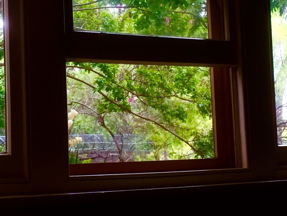 Window Transparent Glass - Material Tree Indoors  Looking Through Window Day No People Growth Nature Close-up