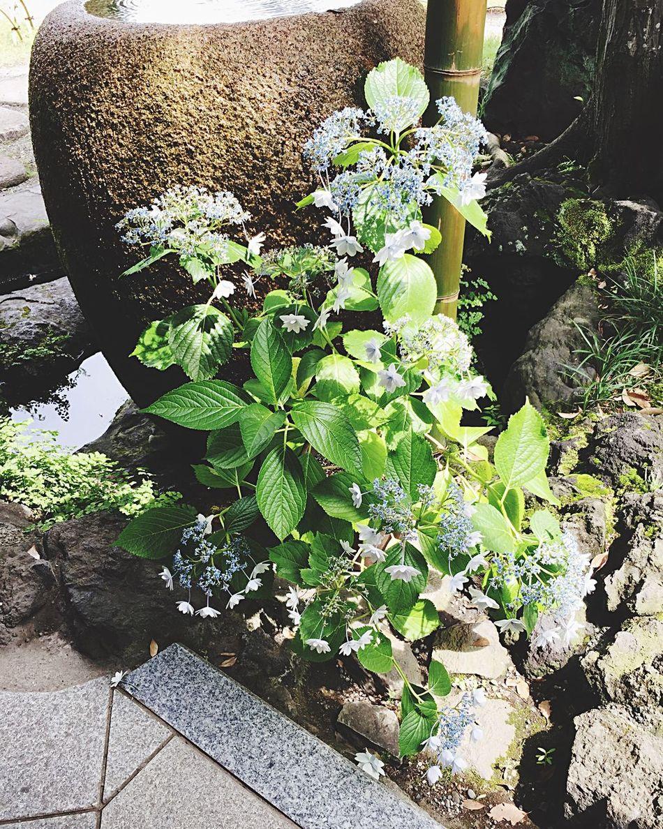 My Corner Memories Flowers Japan