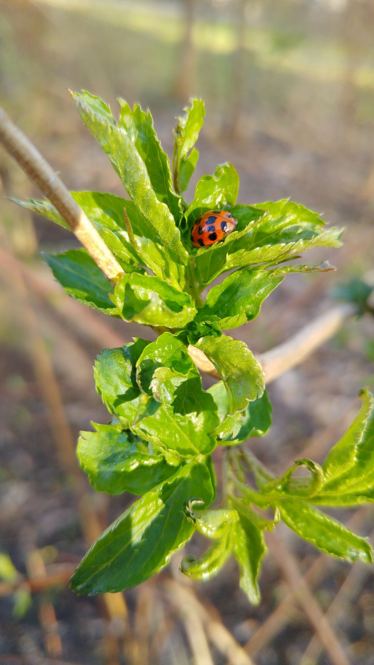 Close-up Leaf Nature Plant Outdoors Growth Beauty In Nature Insect No People Forest Green Color Day Beauty In Nature Beautiful Beautiful Nature Ladybug Spring Freshness Fragility Animal Themes Animals In The Wild Tree Leaves