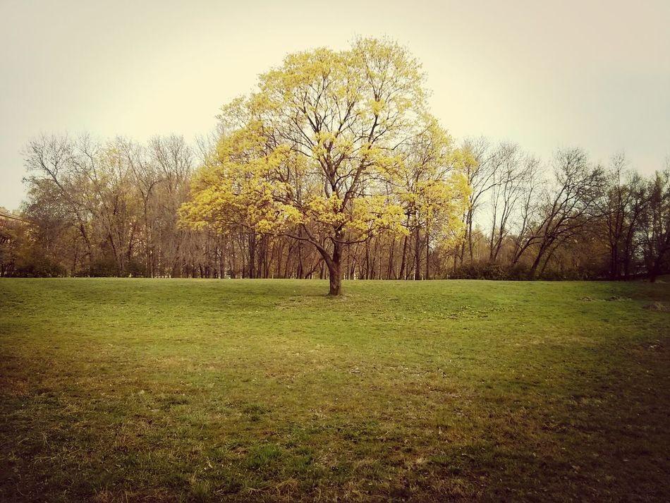 Tree Park Morning