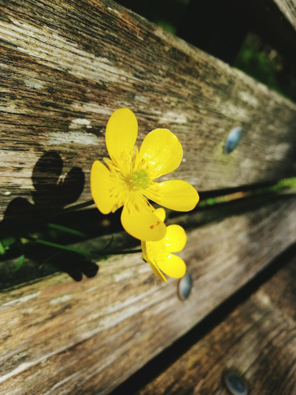 Close-Up Of Flower On Wooden Plank
