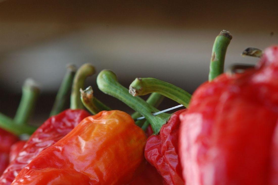 red paprika Close-up Day Dry Paprika Macro No People Paprika Red Parprika Shallow DOF Vegetable