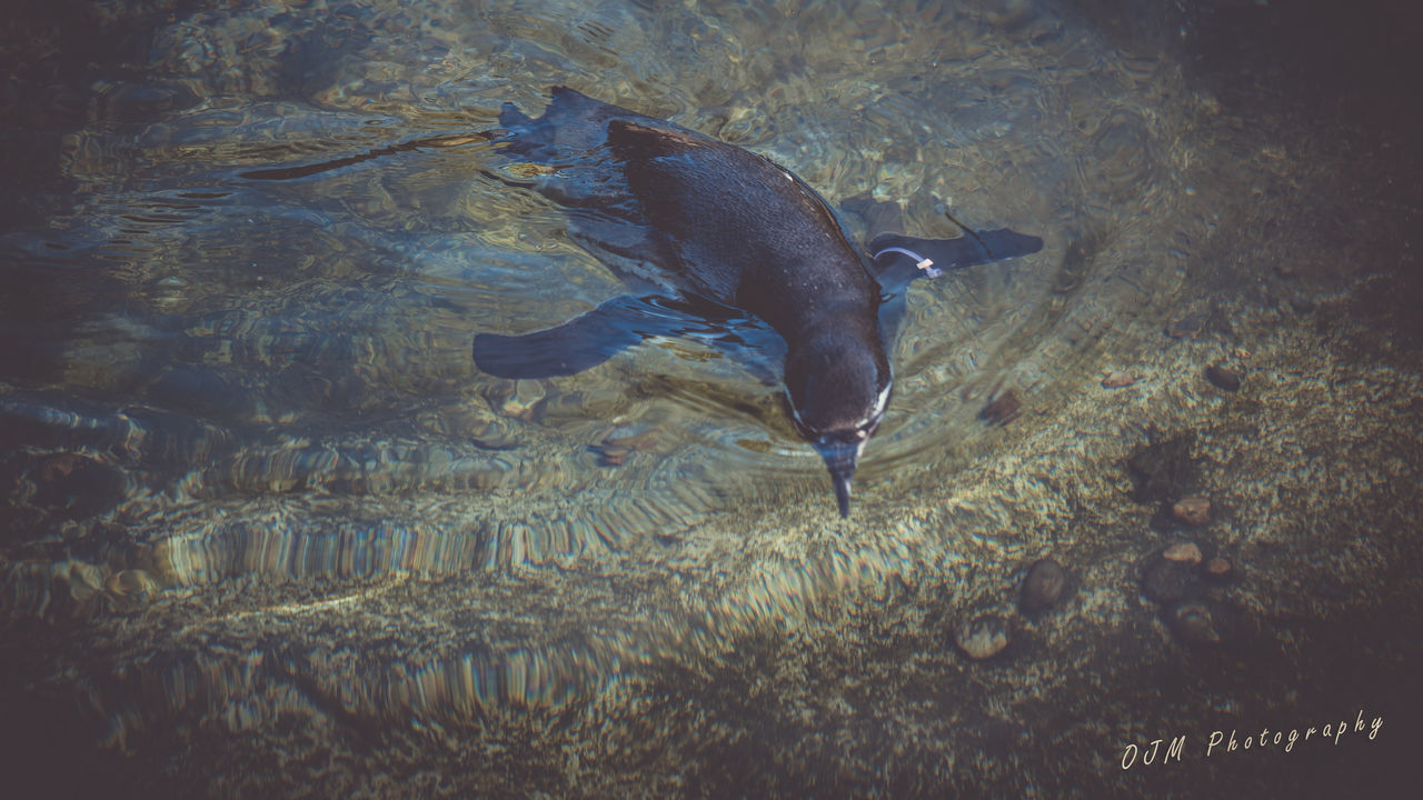 Animal Themes Fish One Animal Animals In The Wild Water Nature Motion Sea Sea Life Underwater No People Beauty In Nature Outdoors UnderSea Day penguin Close-up Taking Photos