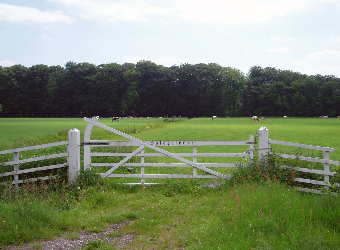 Gate in Dutch landscape. S'gravenland Netherlands Grass Grazing Cattle No People