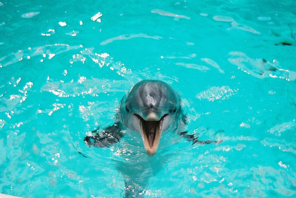 Beautiful stock photos of dolphins, Animal Themes, Day, Dolphin, Elevated View