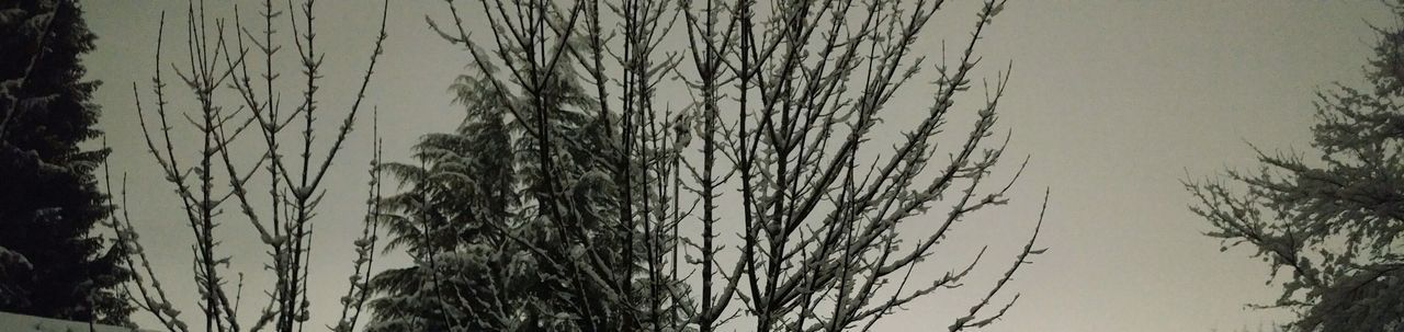 Midnight Snow Snow ❄ Nature Tree Growth No People Outdoors Beauty In Nature Tranquility Sky Snowing Snow Covered Midnight Dark Dark Sky Backgrounds Background Details Of Nature Detail - Midnight Snowfall out my backdoor. Beautiful!