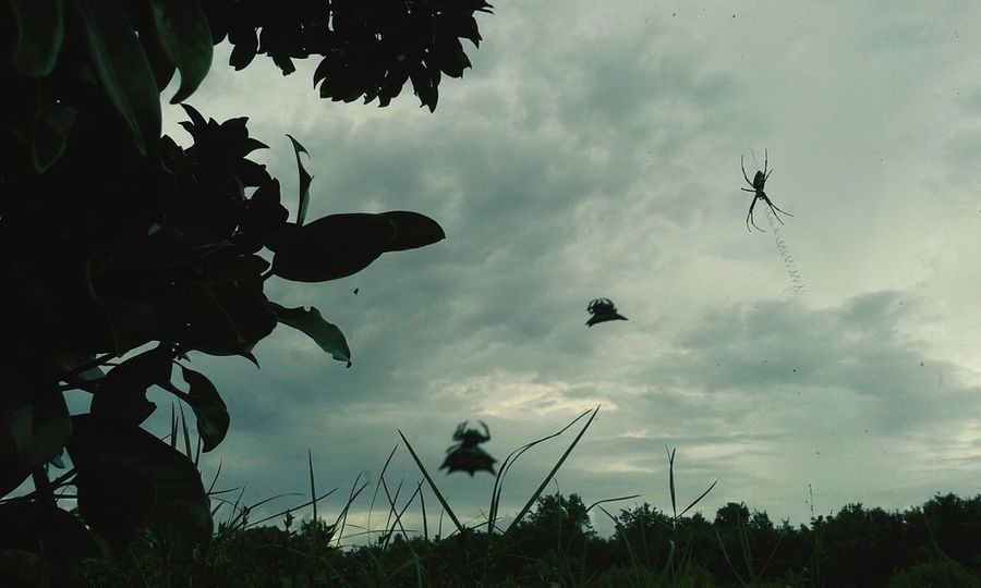 Spiders in the sky :3
