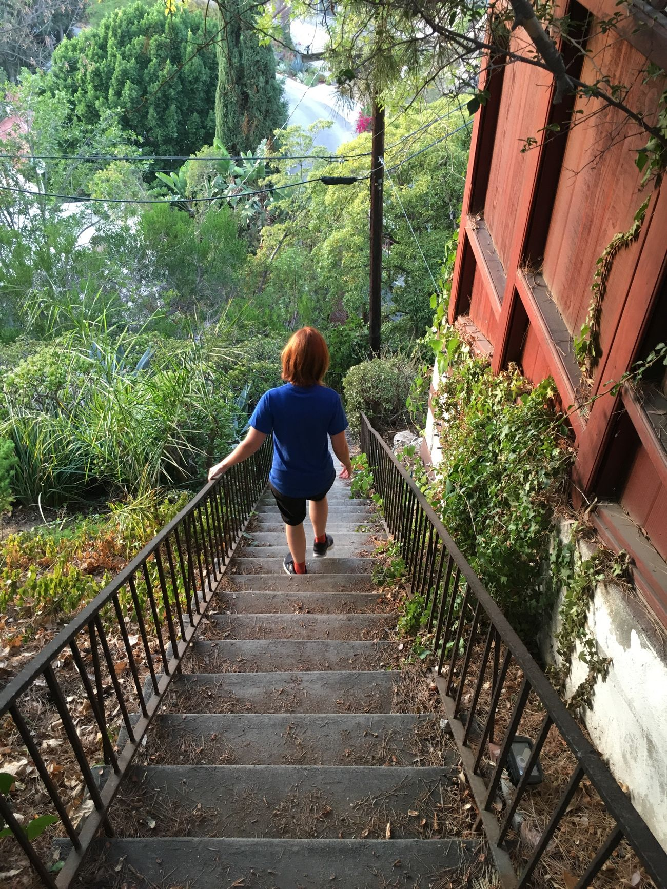 Canyon Stairs Staircase Steps Descent Cliff Hill Verdant Plants Nature Walking Hike The Way Forward One Person Outdoors Steps And Staircases Real People Nature Day Full Length Rear View