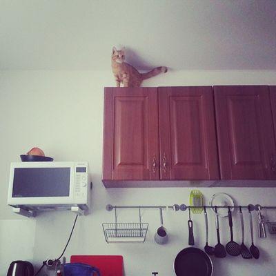 Котео не палится аще )  федя Home Cat  мсьефедорелли