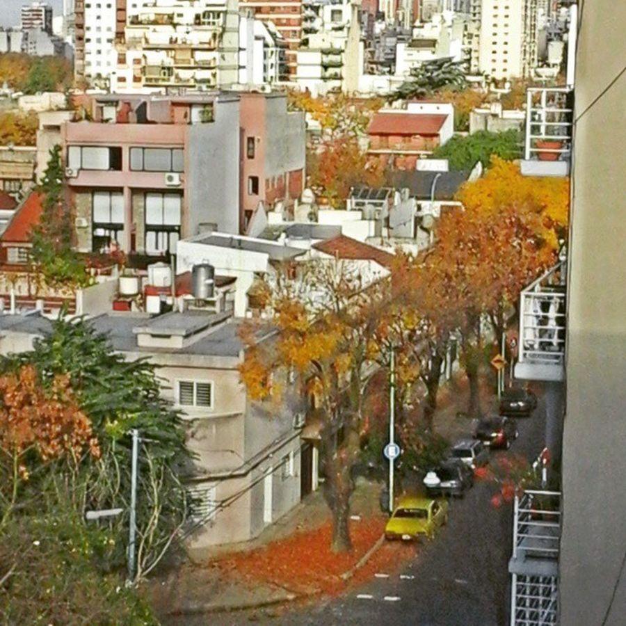 La vista del Otoño desde mi casa. Buenosaires Baires Argentinaingram Photografer Photooftheday NatureIsBeautiful Movingday